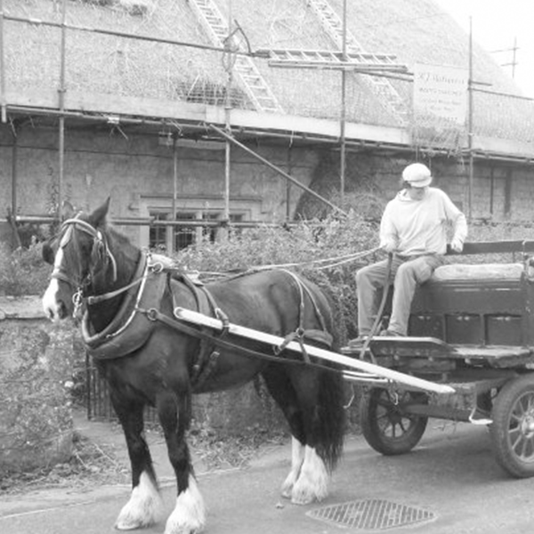 RJ Matravers Traditional Thatching, Horse & Cart